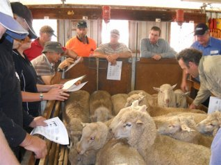 Photos: Managing Scanned Ewes workshops held in early 2012